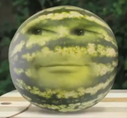 PicnicWatermelon
