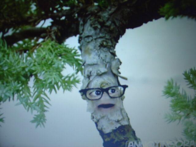 File:Bonsai Tree.JPG