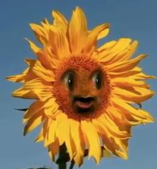 AO Flowers