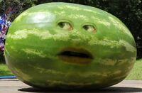 Watermelon AO