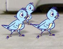 AO Birds Three
