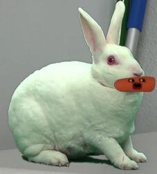 AO Bunny Rabbit
