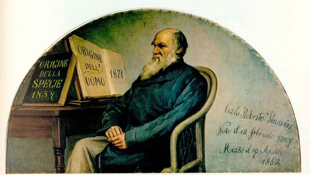 File:Darwin panel.jpg