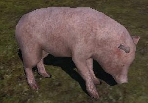 File:Wild pig.JPG