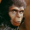 File:Userbox chimpanzee.jpg