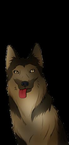 German Shepherd Doggy Grin