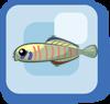 File:Fish Zebra Barred Dartfish.png