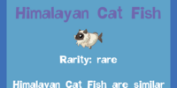 Himalayan Cat Fish
