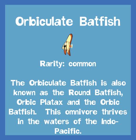 File:Fish2 Orbiculate Batfish.png
