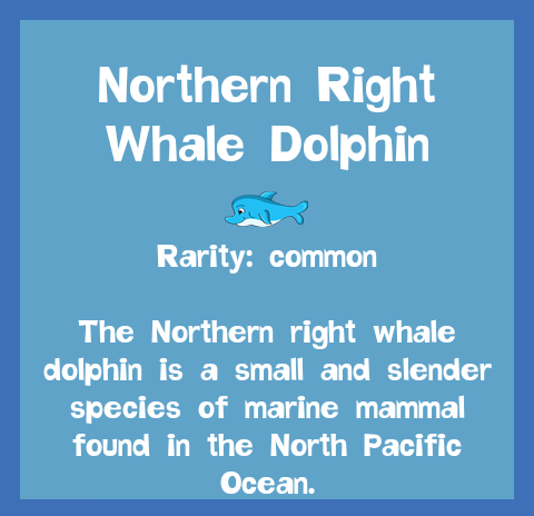 File:Fish2 Northern Right Whale Dolphin.png