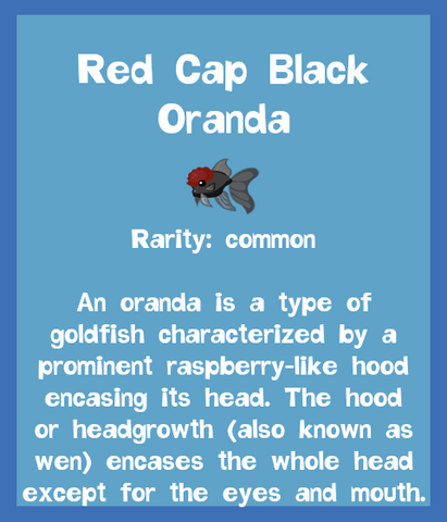File:Fish2 Red Cap Black Oranda.png
