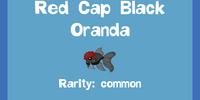 Red Cap Black Oranda