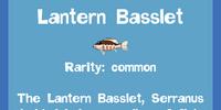 Lantern Basslet