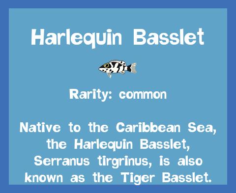 File:Fish2 Harlequin Basslet.png
