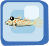 File:Fish Orange Spotted Goby.png