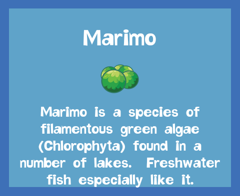 File:Bait2 Marimo.png