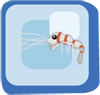 Fish Red-banded Snapping Shrimp