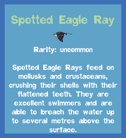 File:Fish2 Spotted Eagle Ray.png