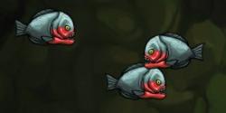 Fish enemy piranha red belly