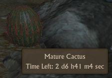 File:Cactus mature.jpg