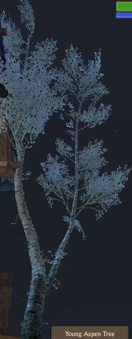 File:Aspen Tree Young.jpg