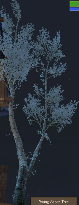 Aspen Tree Young