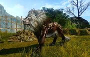 Adult snowlion brown