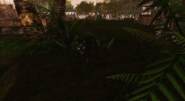 File:Black panther battle pet.jpg