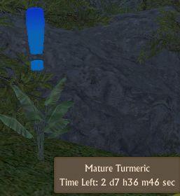 File:Tumeric Mature.jpg