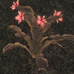 Plant-AL2