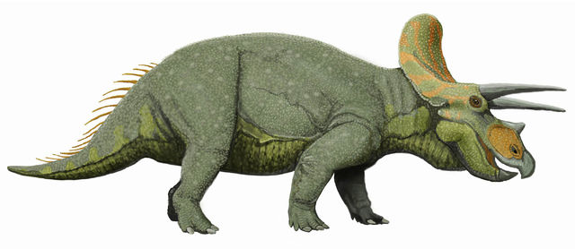 File:Modern Triceratops Reconstruction.jpg