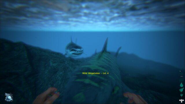 File:ARK-Megalodon Screenshot 001.jpg