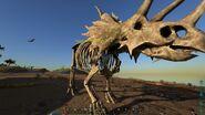 ARK-Skelesaur Triceratops 001