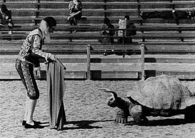 File:Bull turtle.jpg