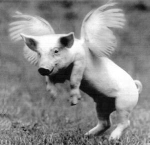 File:Flying pig.jpg