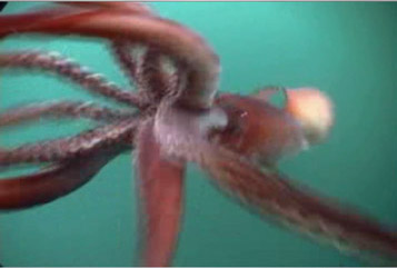 File:Squidshot.jpg