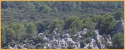 Arachwald.jpg