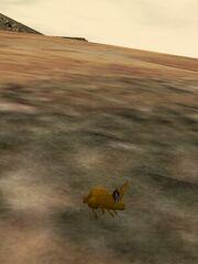 Desert Bunny Live