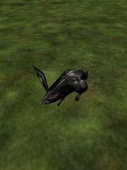 Black Rabbit Live