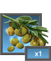 File:PL olives 1.png