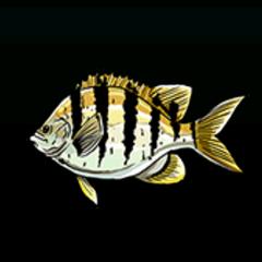 条纹豆娘鱼 - 稀有度:普通,尺寸:小