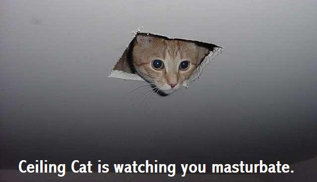 File:Funny cat pictures 046.jpg
