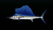 SailfishACP