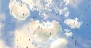 ACR DLC-7-fall3