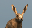 Database: Hare