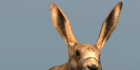 Database: Hare