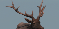 Database: Male Elk