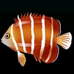 薄荷刺盖鱼 - 稀有度:普通,尺寸:小