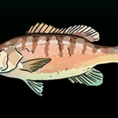 灰笛鲷 - 稀有度:普通,尺寸:小