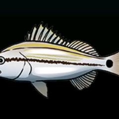 石鲈 - 稀有度:普通,尺寸:小